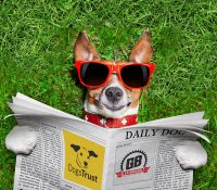 Go Barking Mad at Glastonbudget With The Dogs Trust