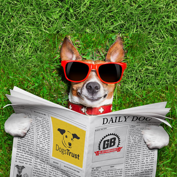 Dogs Trust Blog Image